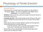 physiology of penile erection