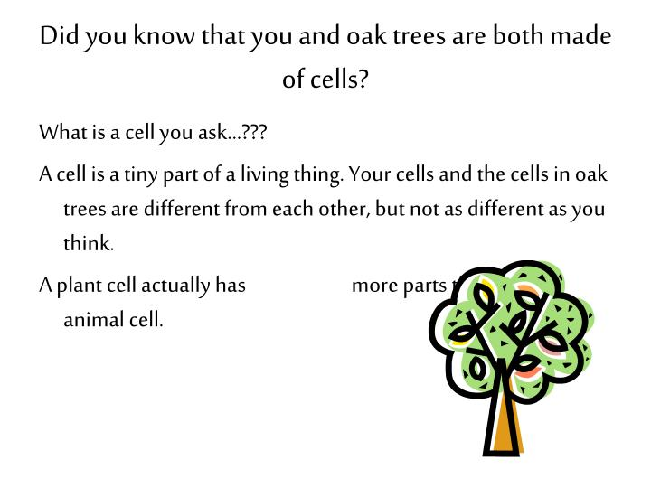 Did you know that you and oak trees are both made of cells?