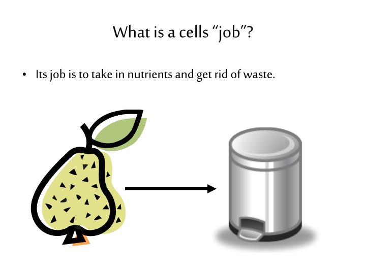 "What is a cells ""job""?"