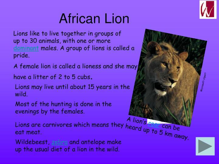 A lion's