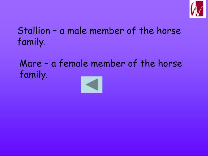 Stallion – a male member of the horse