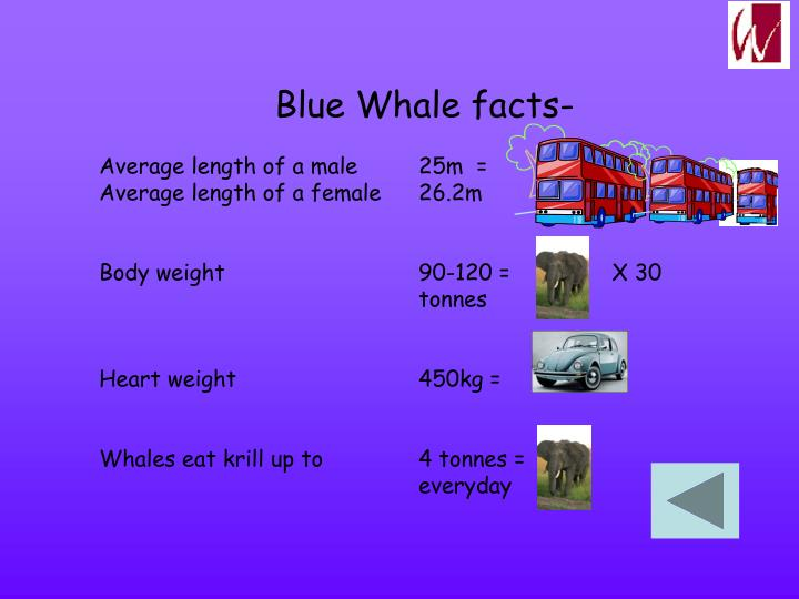 Blue Whale facts-