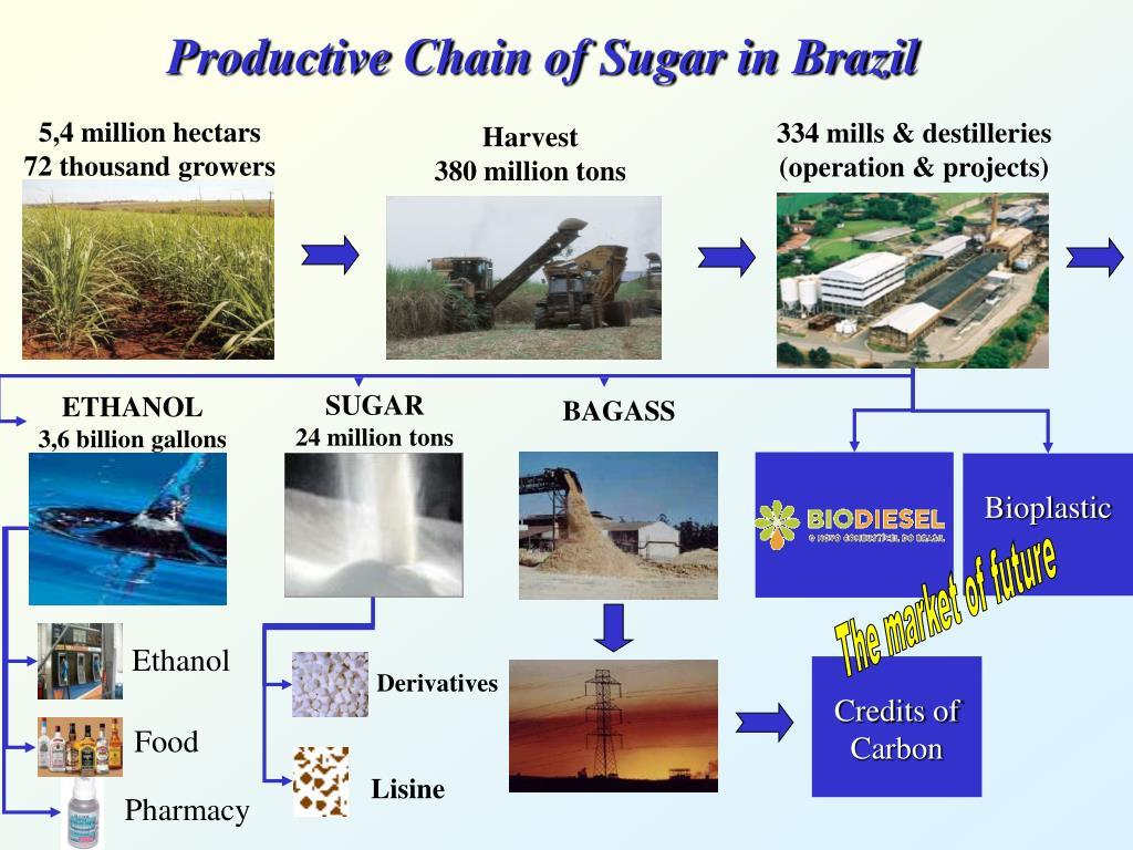 Productive Chain of Sugar in Brazil