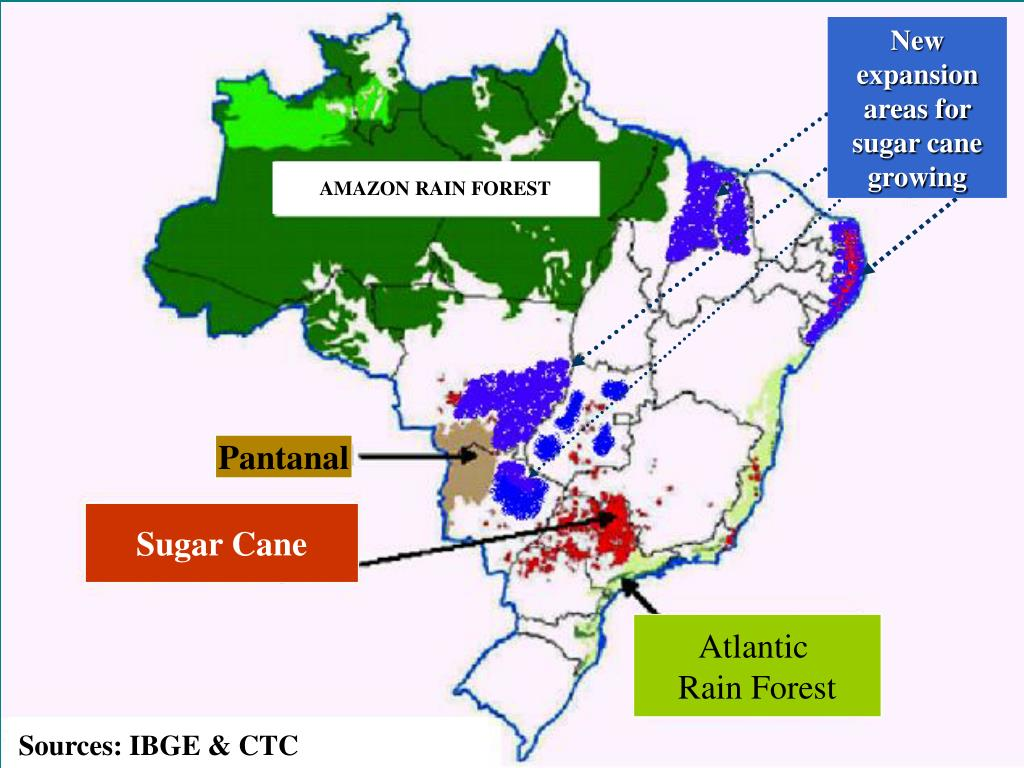New expansion areas for sugar cane growing