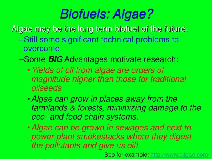 Biofuels: Algae?