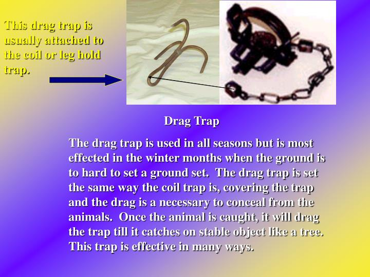 This drag trap is usually attached to the coil or leg hold trap.
