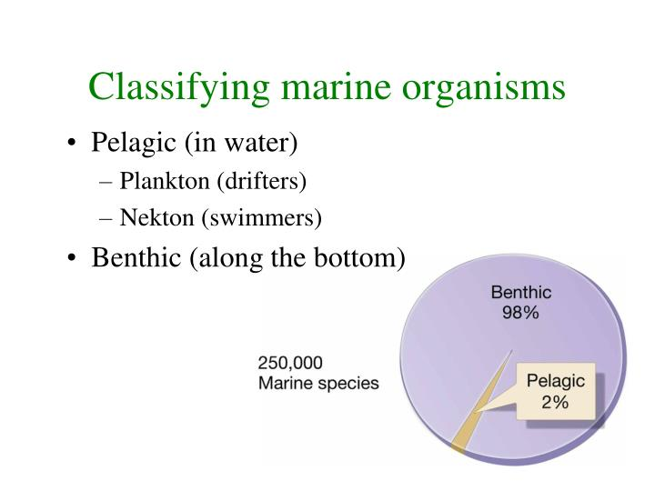 Classifying marine organisms