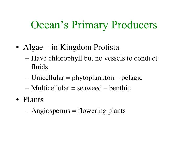 Ocean's Primary Producers