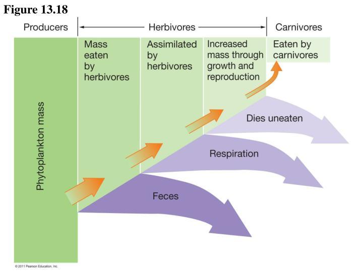 Figure 13.18