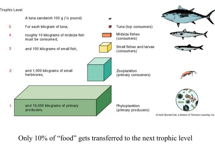 "Only 10% of ""food"" gets transferred to the next trophic level"
