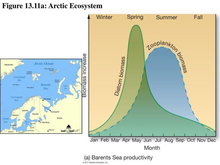 Figure 13.11a: Arctic Ecosystem