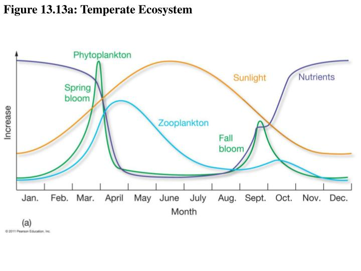 Figure 13.13a: Temperate Ecosystem