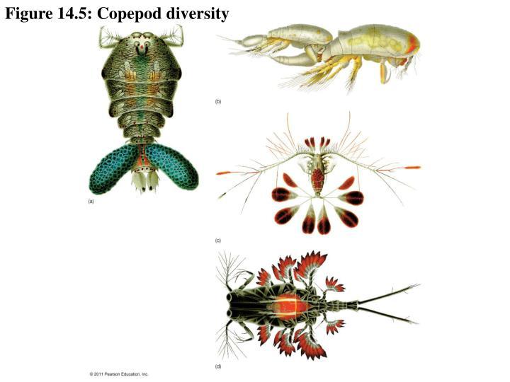 Figure 14.5: Copepod diversity