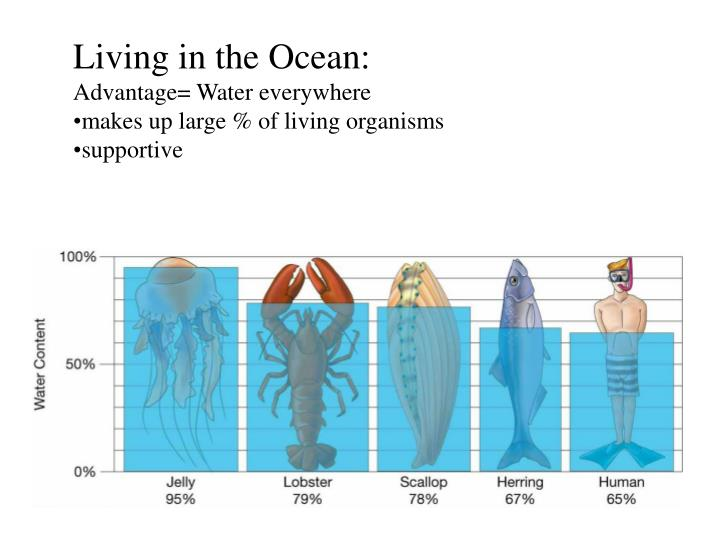Living in the Ocean: