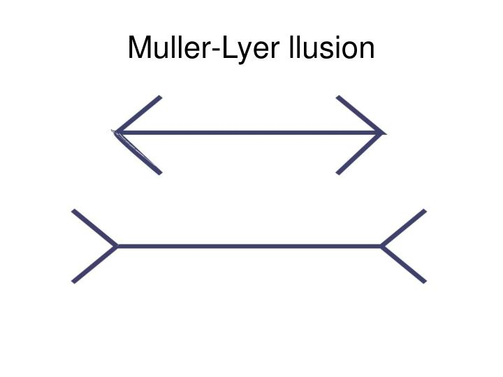 Muller-Lyer llusion