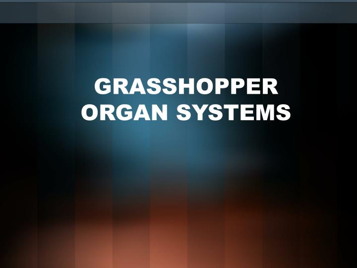 Grasshopper organ systems
