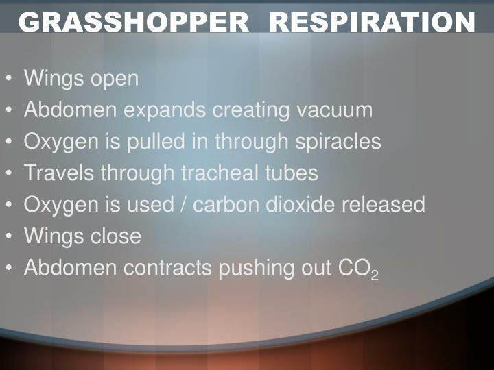 GRASSHOPPER  RESPIRATION