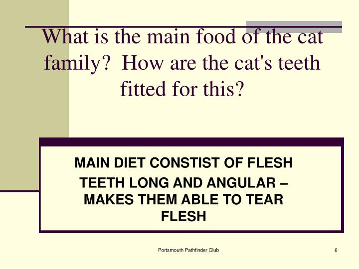 What is the main food of the cat family?  How are the cat's teeth fitted for this?