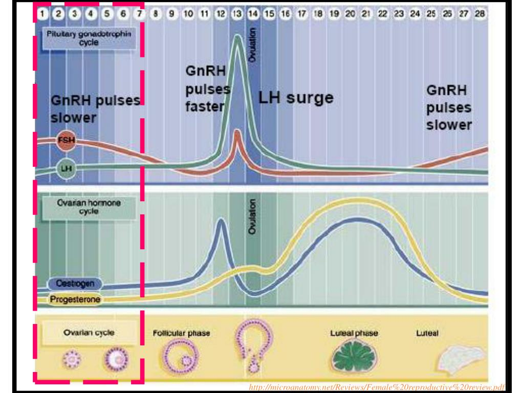 http://microanatomy.net/Reviews/Female%20reproductive%20review.pdf