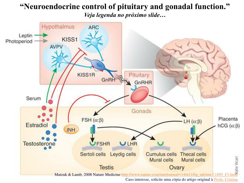 """Neuroendocrine control of pituitary and gonadal function."""