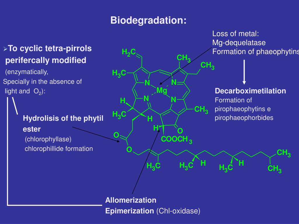 Biodegradation: