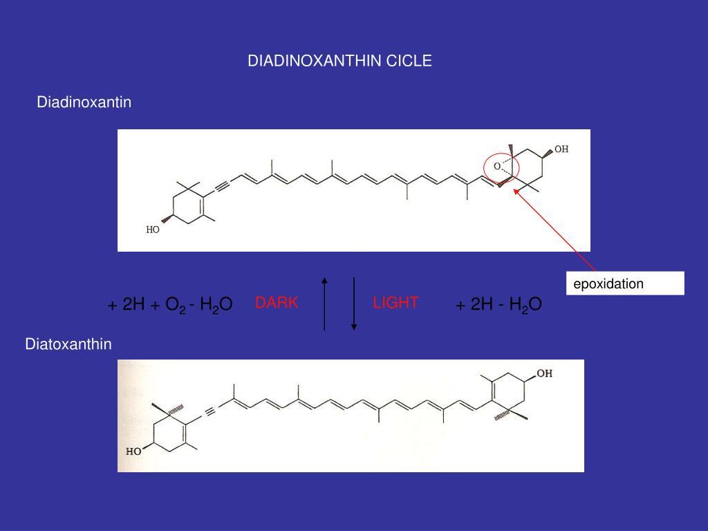 DIADINOXANTHIN CICLE