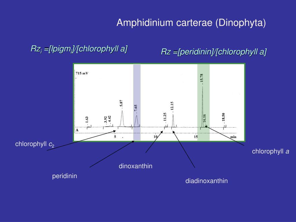 Amphidinium carterae (Dinophyta)