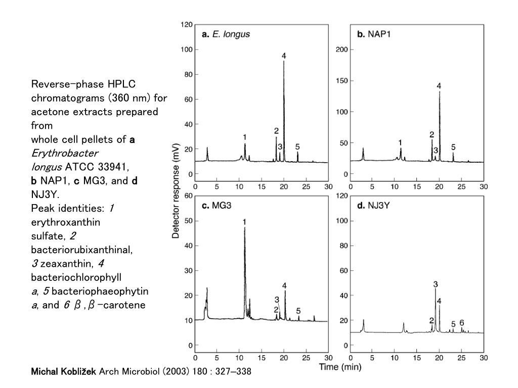 Reverse-phase HPLC