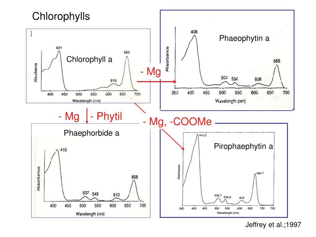 Chlorophylls