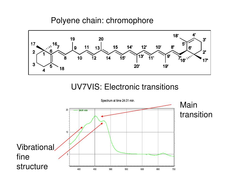 Polyene chain: chromophore