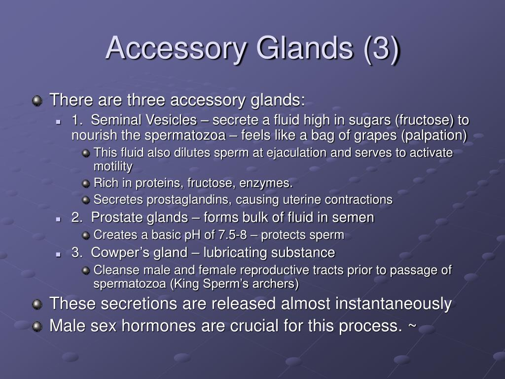 Accessory Glands (3)
