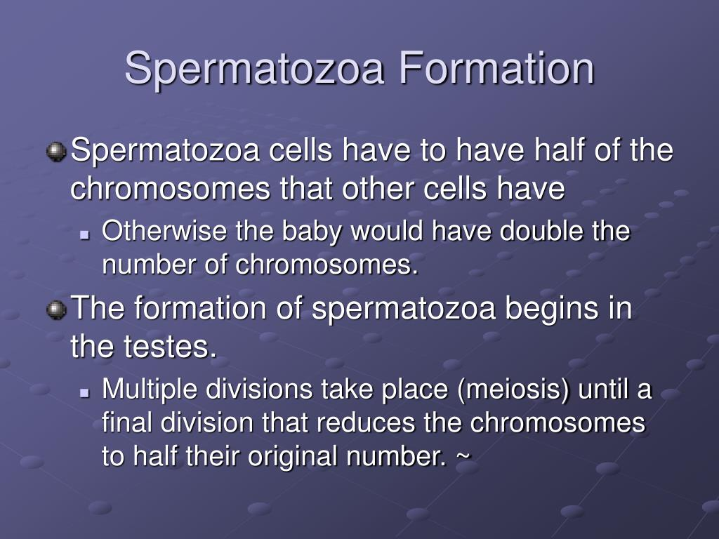Spermatozoa Formation
