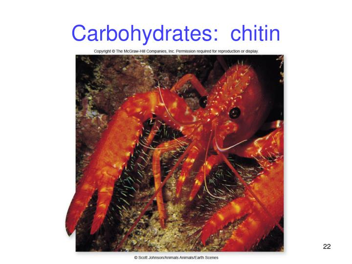Carbohydrates:  chitin