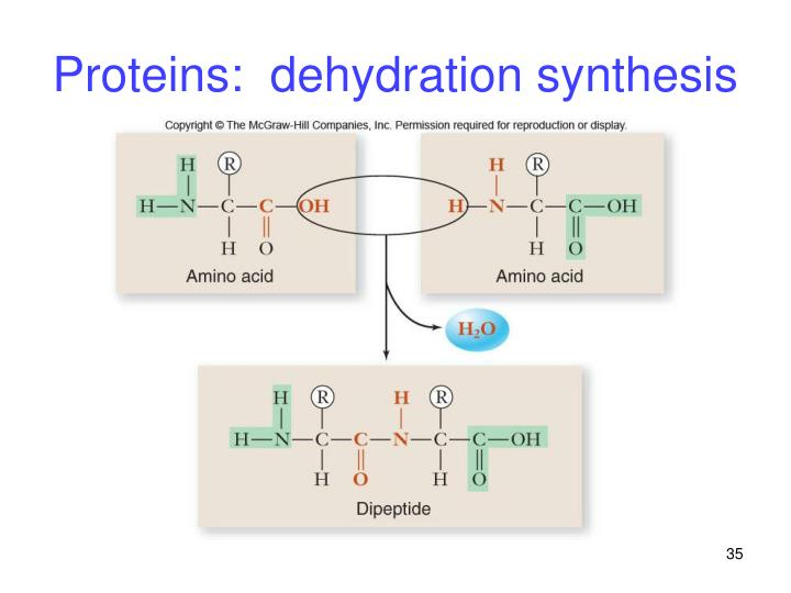 Proteins:  dehydration synthesis