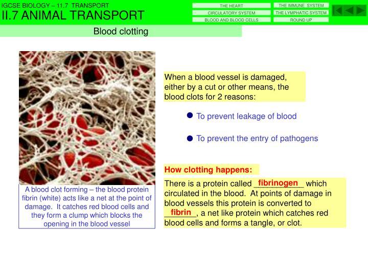 How clotting happens: