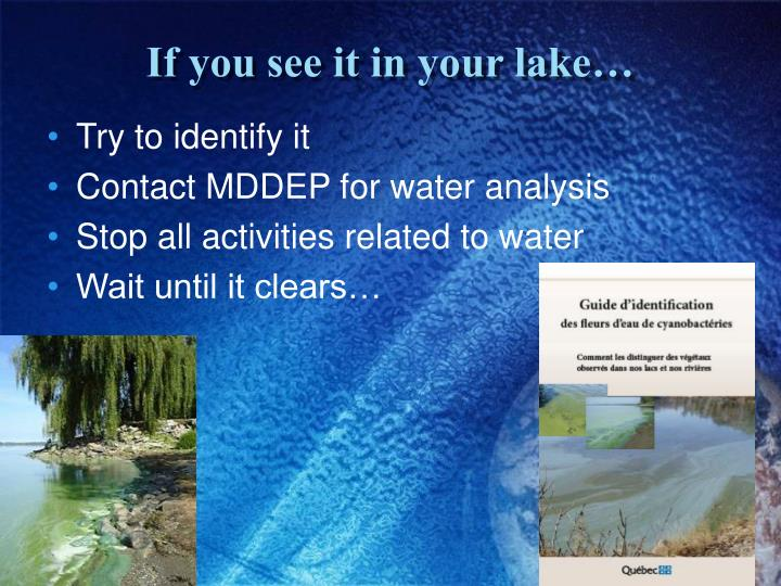 If you see it in your lake…