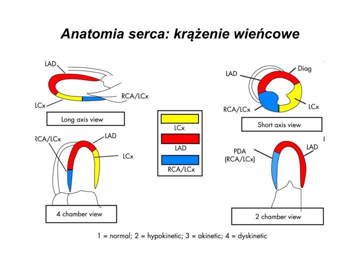 Anatomia serca: krążenie wieńcowe