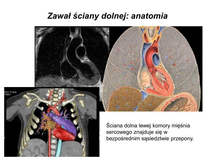 Zawał ściany dolnej: anatomia