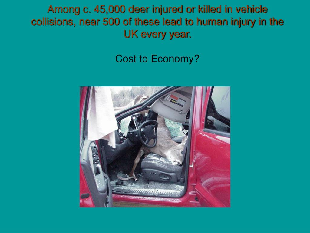 Among c. 45,000 deer injured or killed in vehicle collisions, near 500 of these lead to human injury in the UK every year.