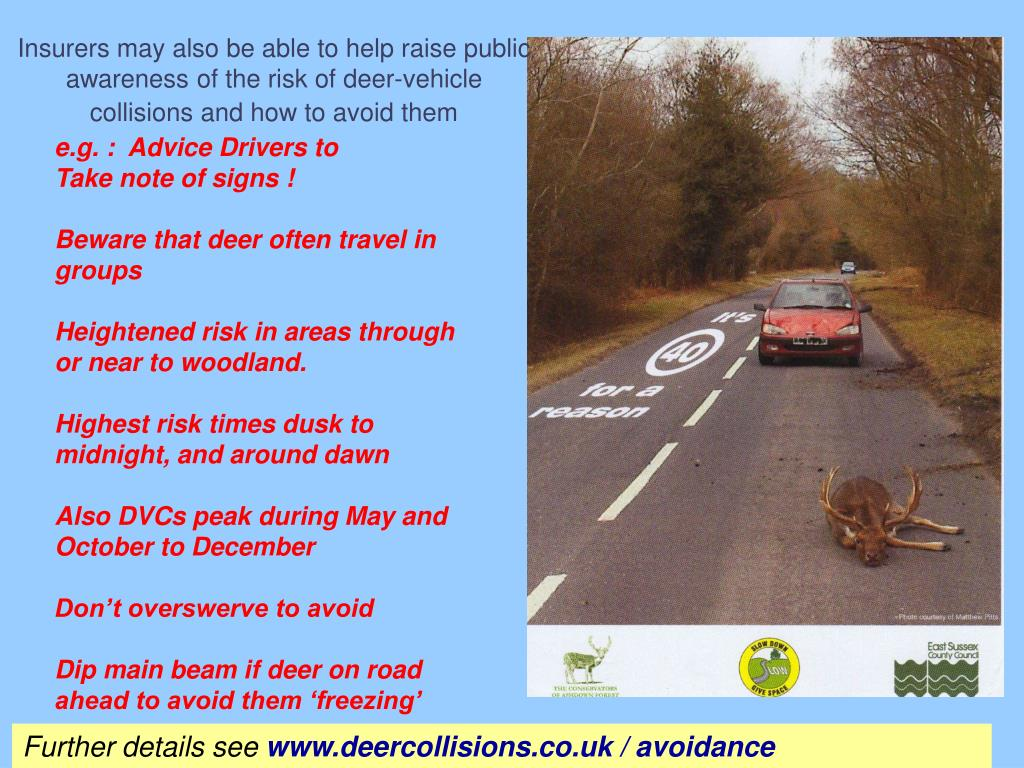 Insurers may also be able to help raise public awareness of the risk of deer-vehicle collisions and how to avoid them