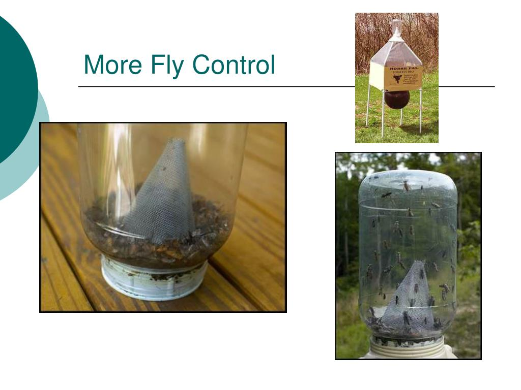 More Fly Control