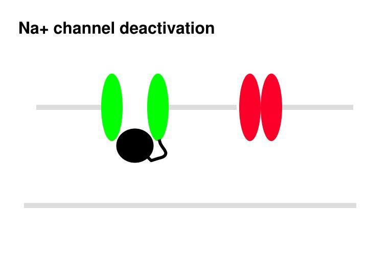 Na+ channel deactivation