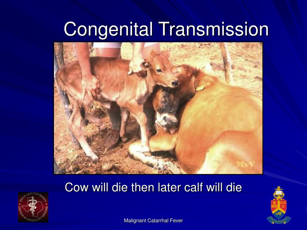 Congenital Transmission
