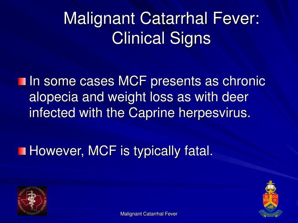 Malignant Catarrhal Fever: Clinical Signs
