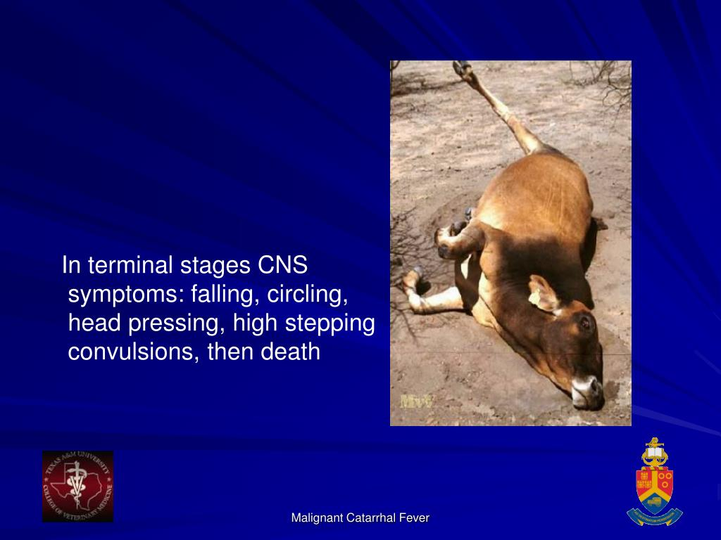 In terminal stages CNS