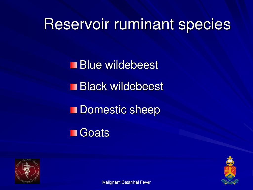 Reservoir ruminant species