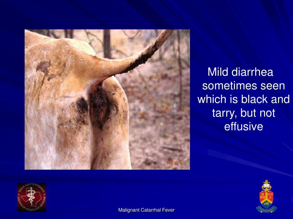 Mild diarrhea