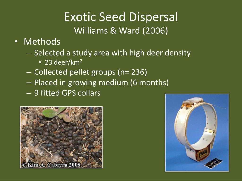 Exotic Seed Dispersal