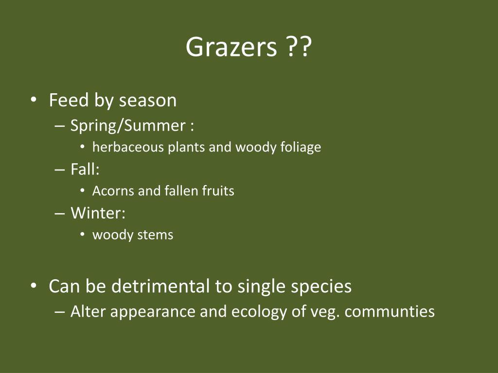 Grazers ??