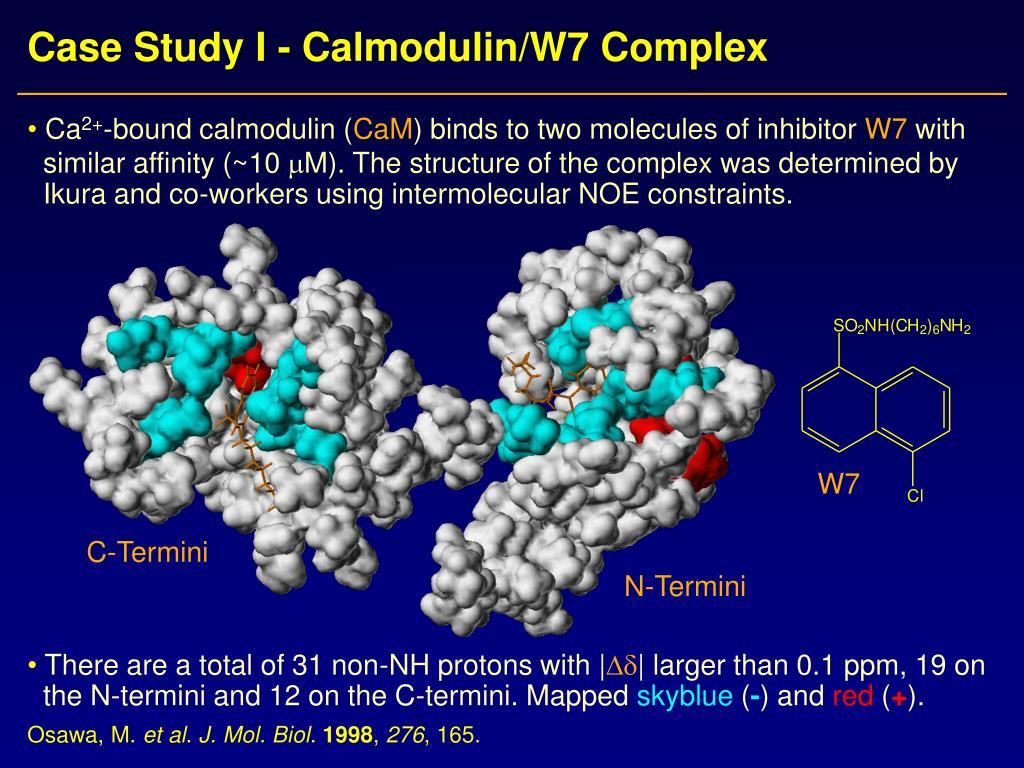Case Study I - Calmodulin/W7 Complex